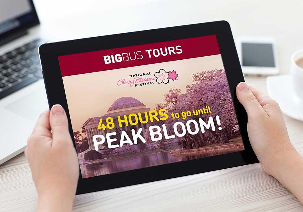 Big bus tours web design